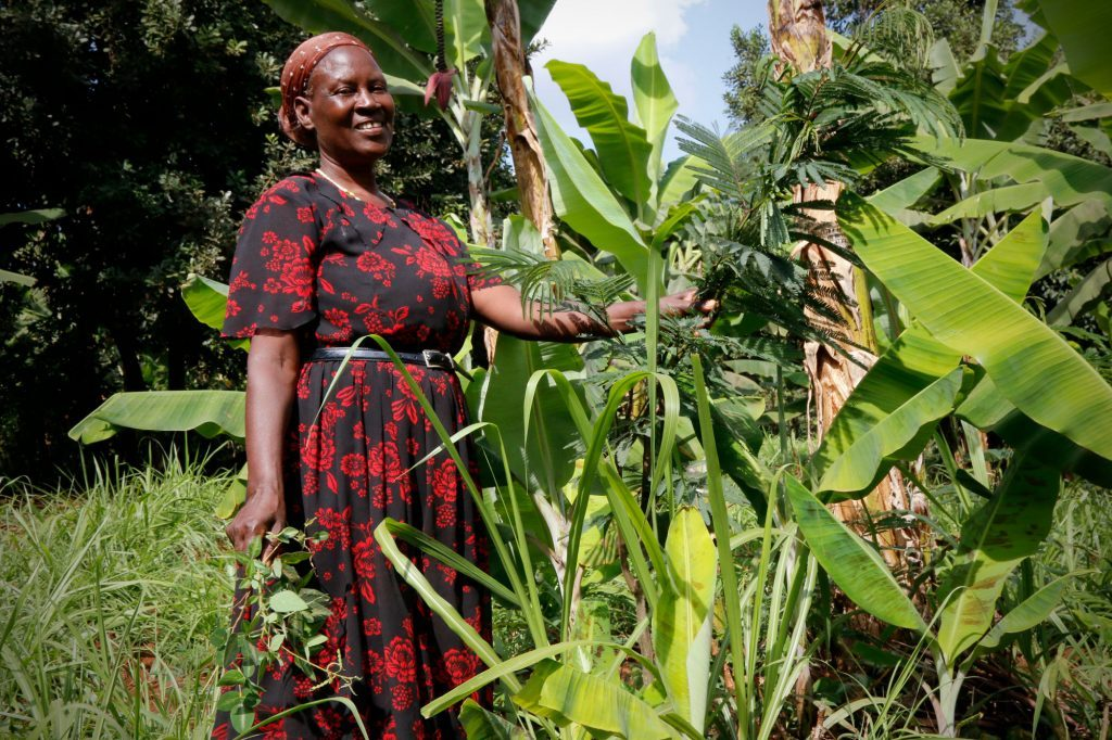 EverGreen Agriculture: a solution for degraded landscapes