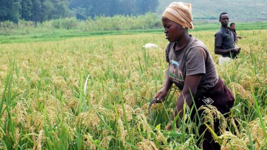 Green agriculture initiative to boost food security for 70,000 households