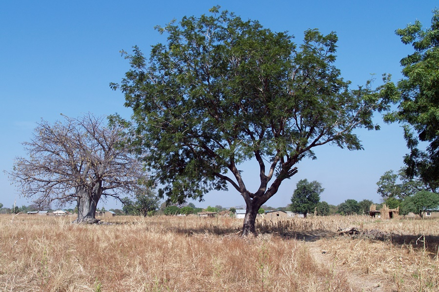 Restoring land and increasing resilience needs women