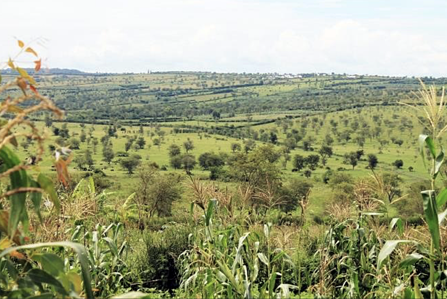 Operationalizing the Agroforestry Strategy and Plan for Rwanda