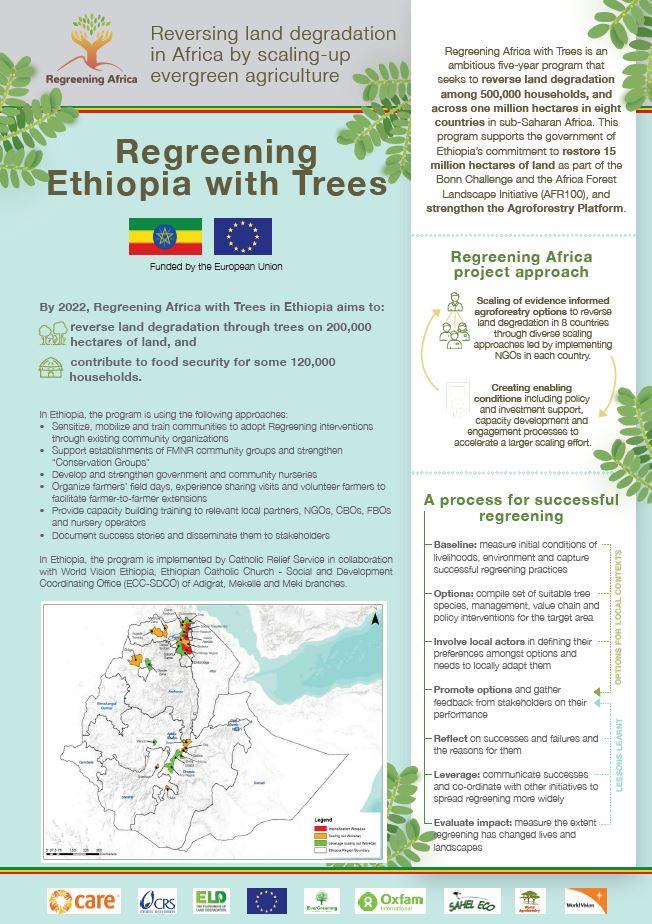 Regreening Ethiopia with Trees