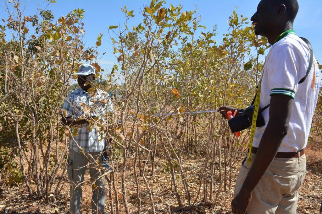 Land Degradation Surveillance Framework deployed in Senegal