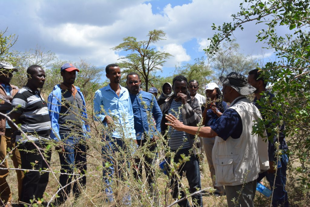 Benefits from trees regreen land and livelihoods