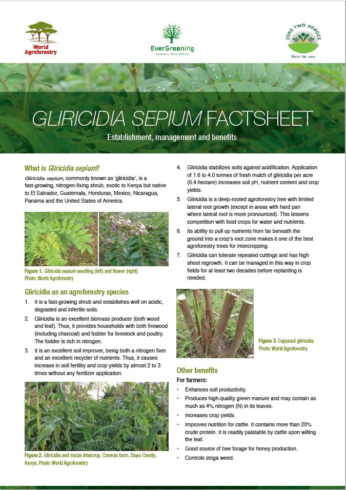 Gliricidia sepium Fact Sheet