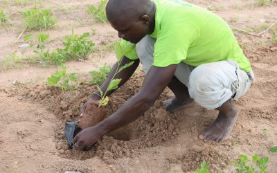 Land Restoration in Africa: Practical Perspectives from the Regreening Africa Programme