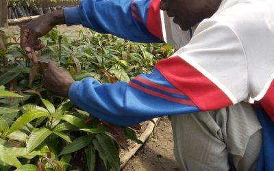 Regreening Africa: an initiative that puts farmers first in Rwanda