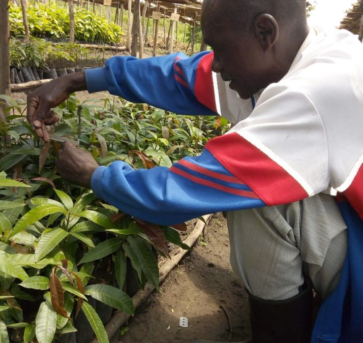 Regreening Africa: an initiative that puts farmers first in Rwanda