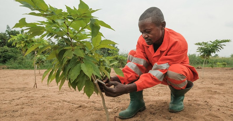 Tree planting is critical for sustainable future but can't fix climate change on its own