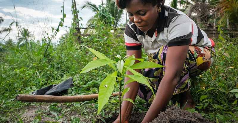 Dispelling the top seven tree planting misconceptions