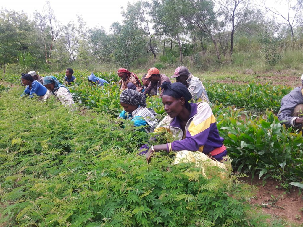 Prioritising agroforestry in the policy agenda: six recommendations to scaling