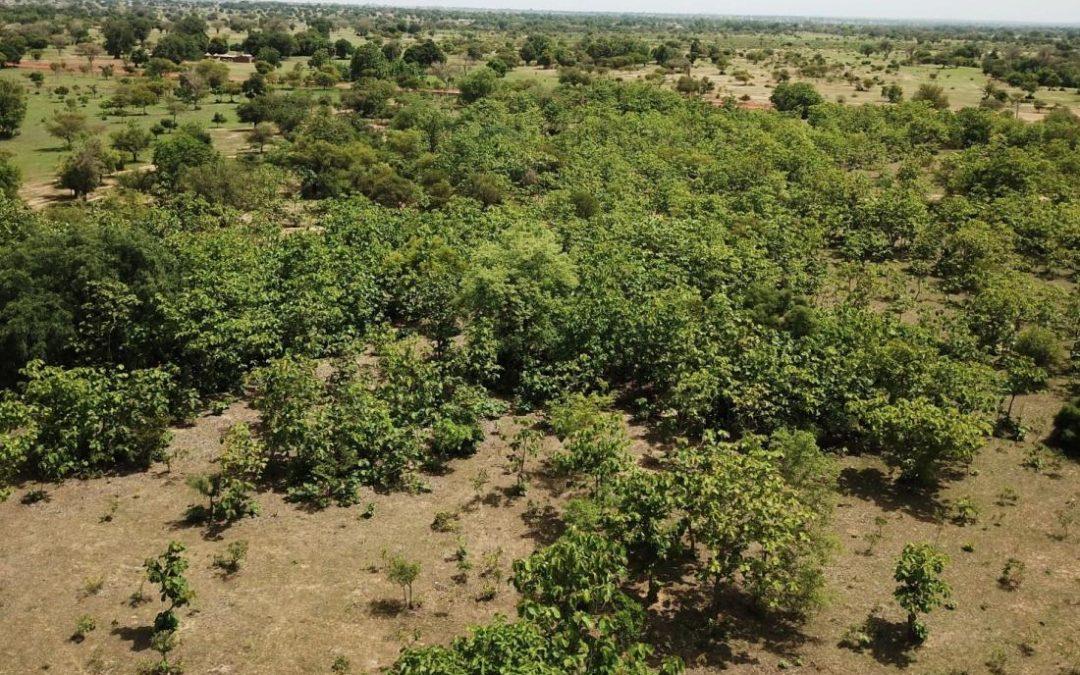 Adonsi Community Re-generating 75 Acres Of Land