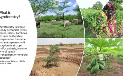 Agroforestry as part of Nature-Based Solutions: Exploring Evidence and Knowledge Gaps