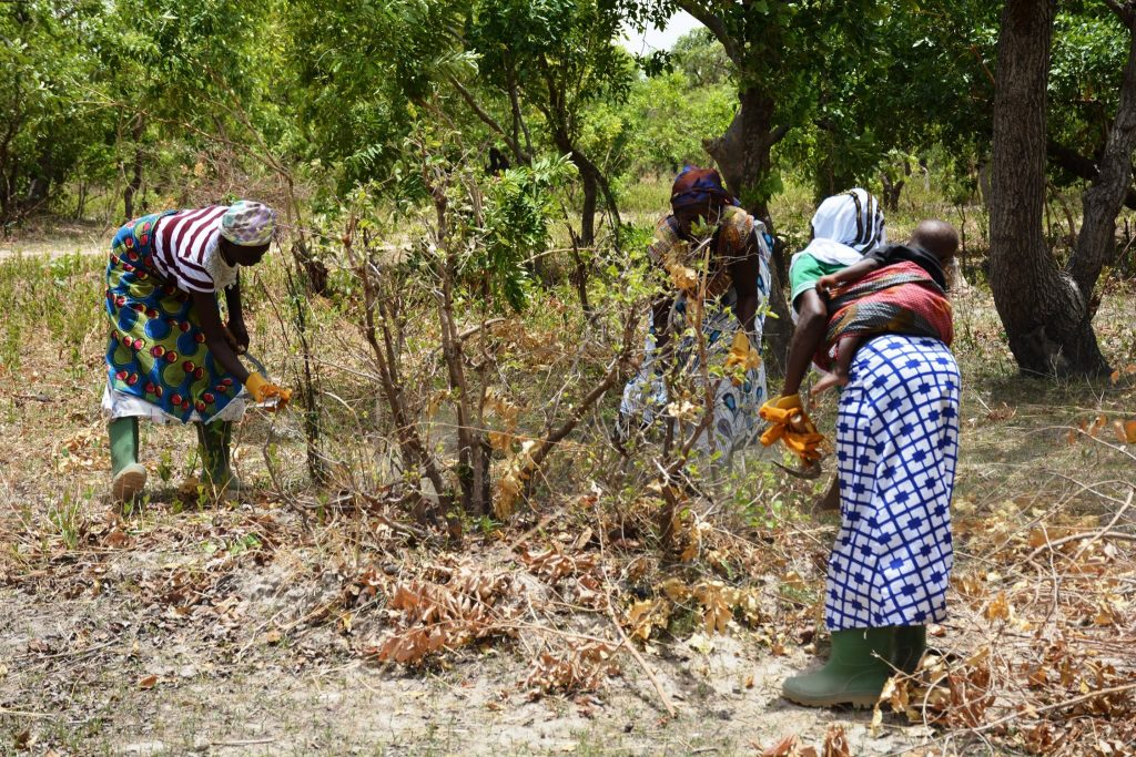 Farmers restore land in Africa with natural regeneration but how can we learn what practices work where and for whom?