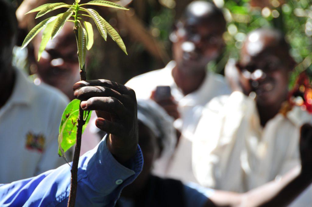 Restoring degraded land in Kenya with Regreening Africa