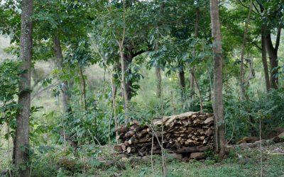 Kenya's Bioenergy Strategy supported by World Agroforestry