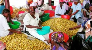 Climate resilient food systems for Africa: From evidence to action