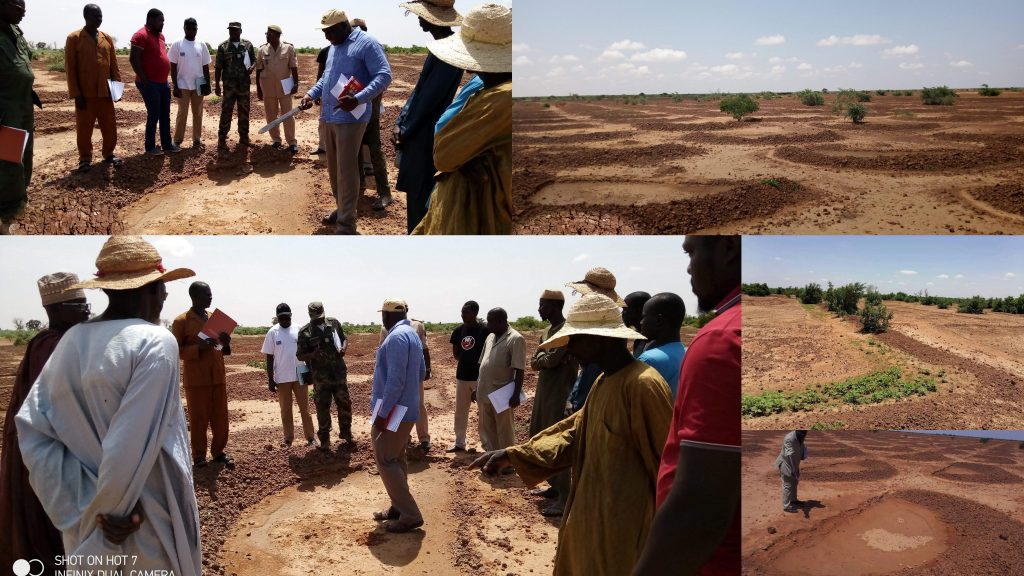 Niger formally adopts farmer-managed natural regeneration
