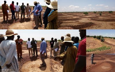 Niger formally adopts farmer-managed natural regeneration