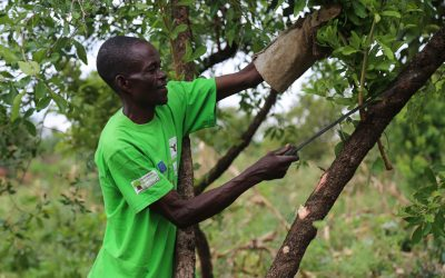 Kenya spreads the roots of Farmer Managed Natural Regeneration (FMNR) in the country