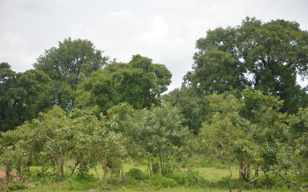 Catalyzing a movement for expanding Kenya's landscape restoration