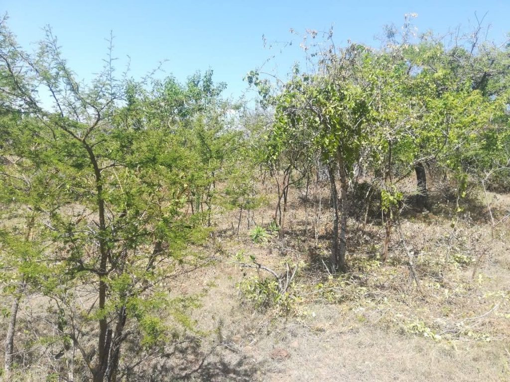 Trees aids farmers to reduce cost of fish feeds
