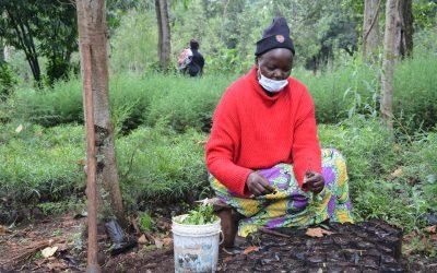 Women nursery operators shaping landscape restoration in Elgeyo Marakwet