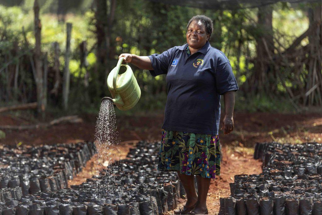 Fruit tree farming safeguards livelihoods for women in Baringo County